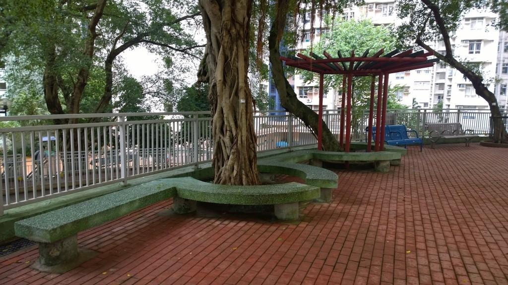 黃家華議員-我的梨木樹09